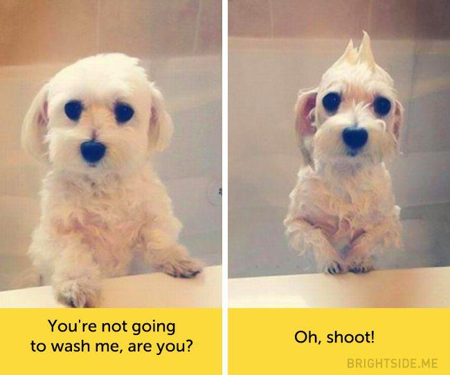 dog facial expressions 4