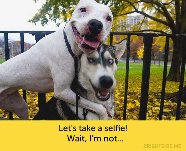 dog facial expressions 5