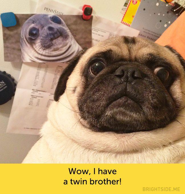 dog facial expressions 6