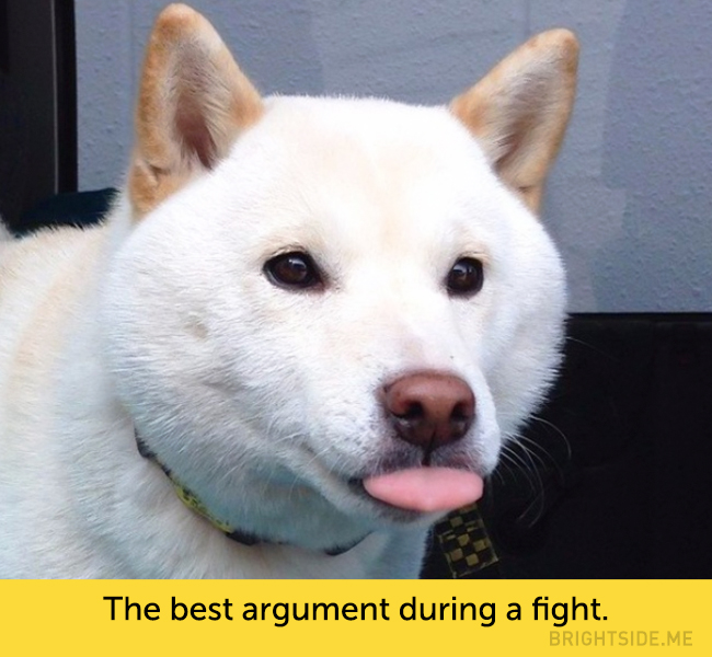 dog facial expressions 7