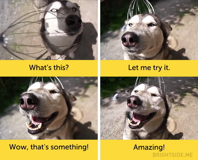 dog facial expressions 8