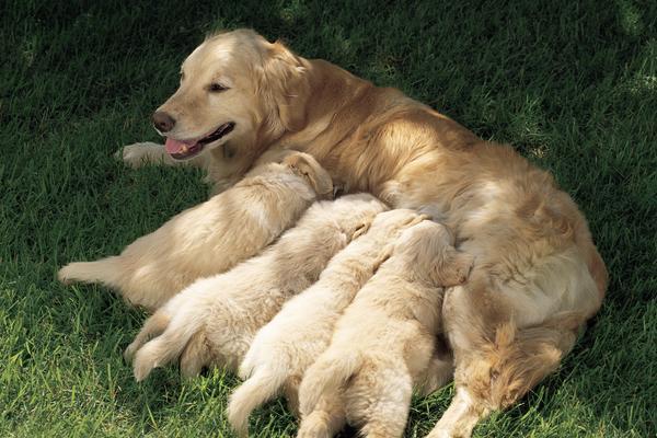 dog facts 13