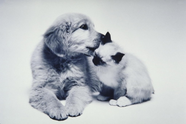 dogs and cats friendship 1