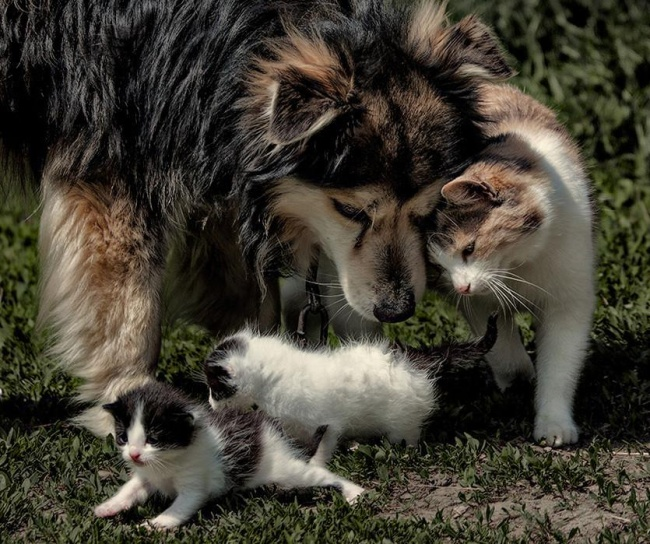dogs and cats friendship 10
