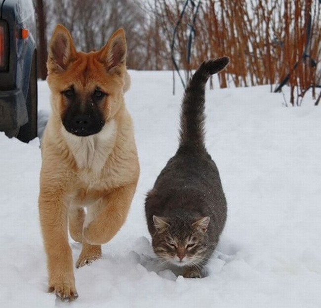 dogs and cats friendship 3