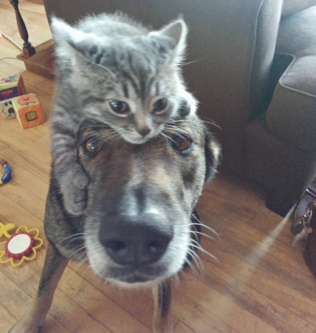 dogs and cats friendship 5