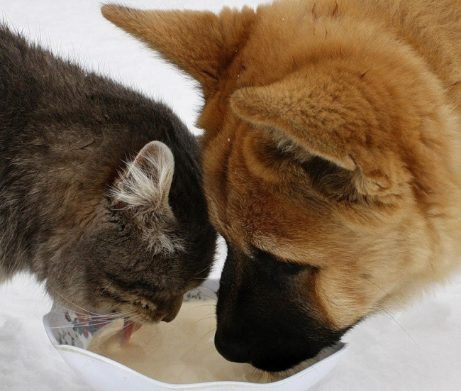 dogs and cats friendship 6