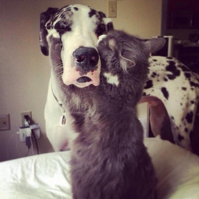 dogs and cats friendship 7