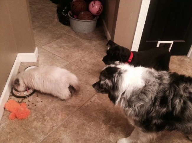 dogs are defenseless against cats 9