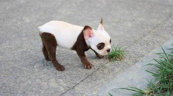 dogs with beautiful markings 1
