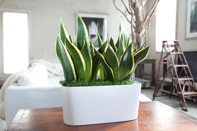 houseplants can live without water