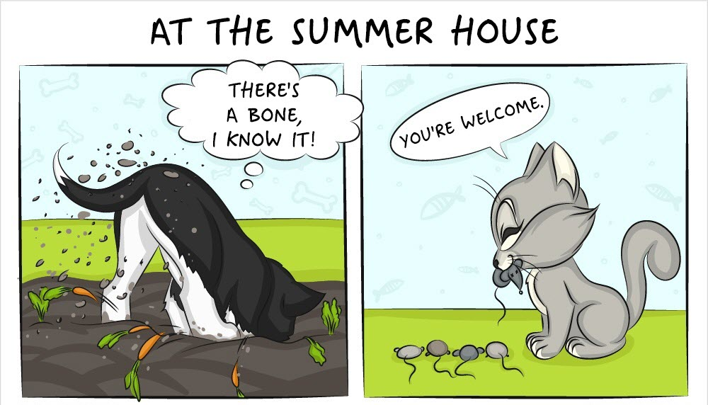 life with cats and dogs differ 12