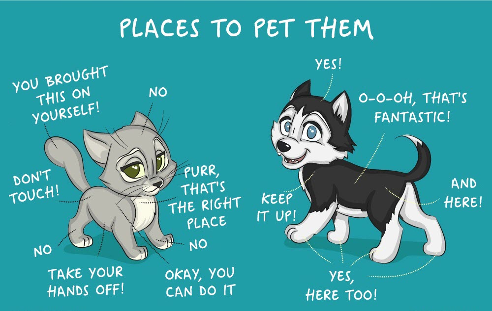 life with cats and dogs differ 13