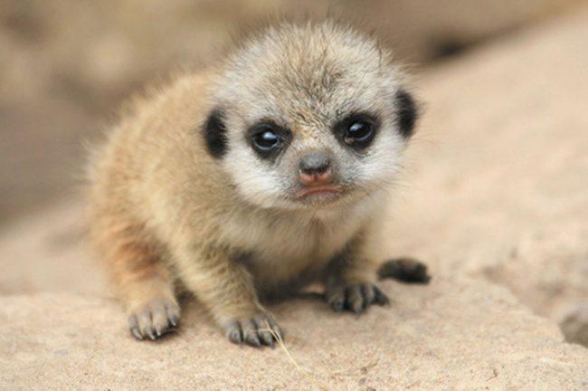 newborn animals 1