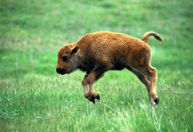 newborn animals 10