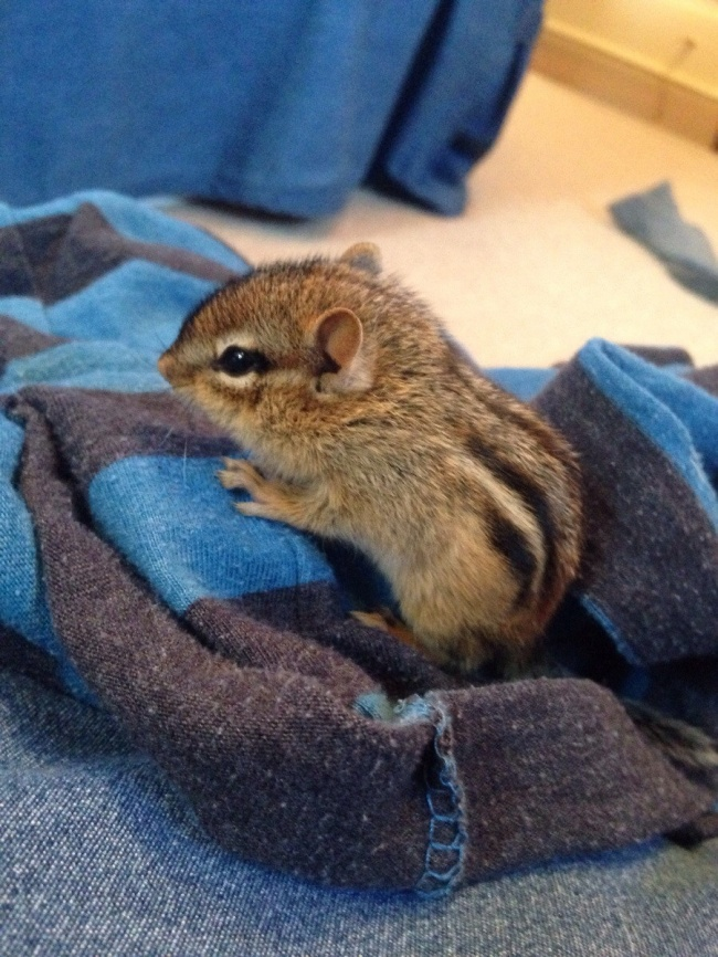 newborn animals 15