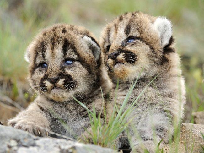 newborn animals 5
