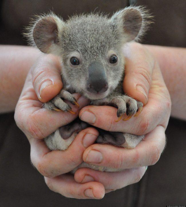 newborn animals 6