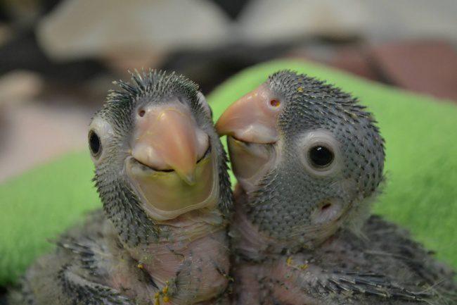 newborn animals 8