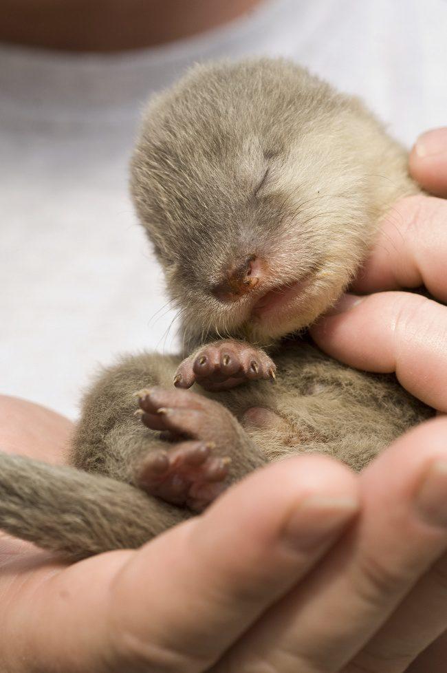 newborn animals 9