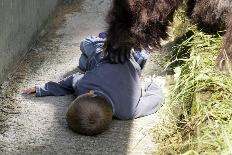 saved by a gorilla 1