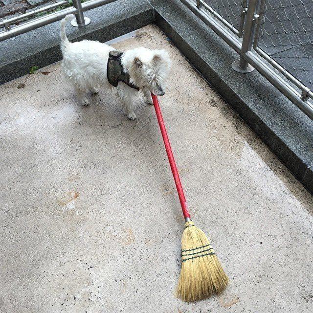 think twice before bringing dog 15