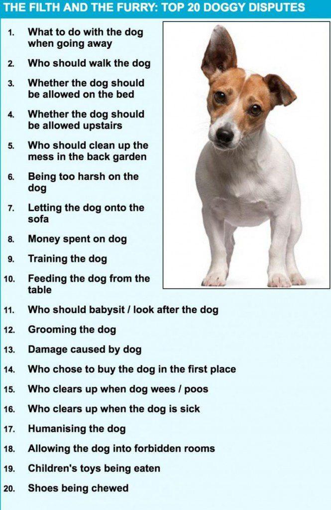 think twice before bringing dog 2