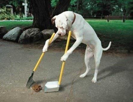 think twice before bringing dog 3