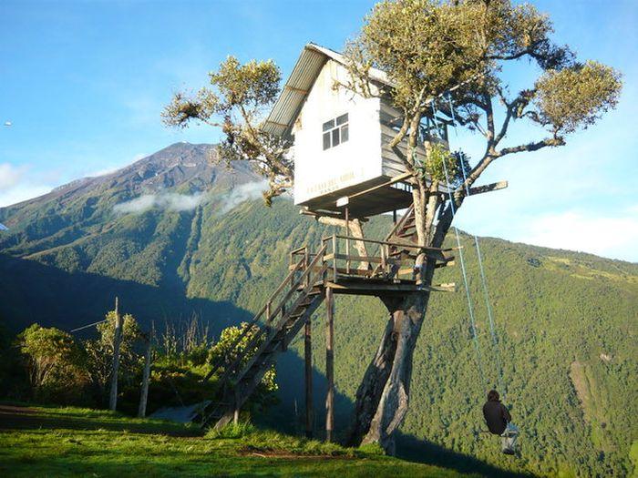 tree swing 2