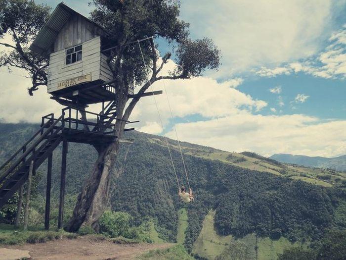 tree swing 4