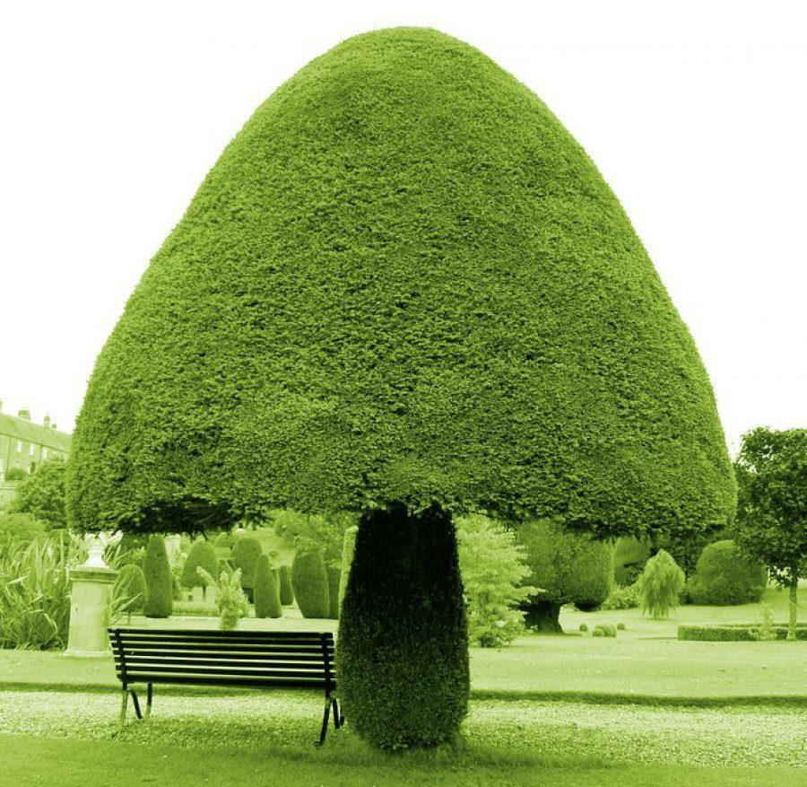 Beautiful and strange trees1