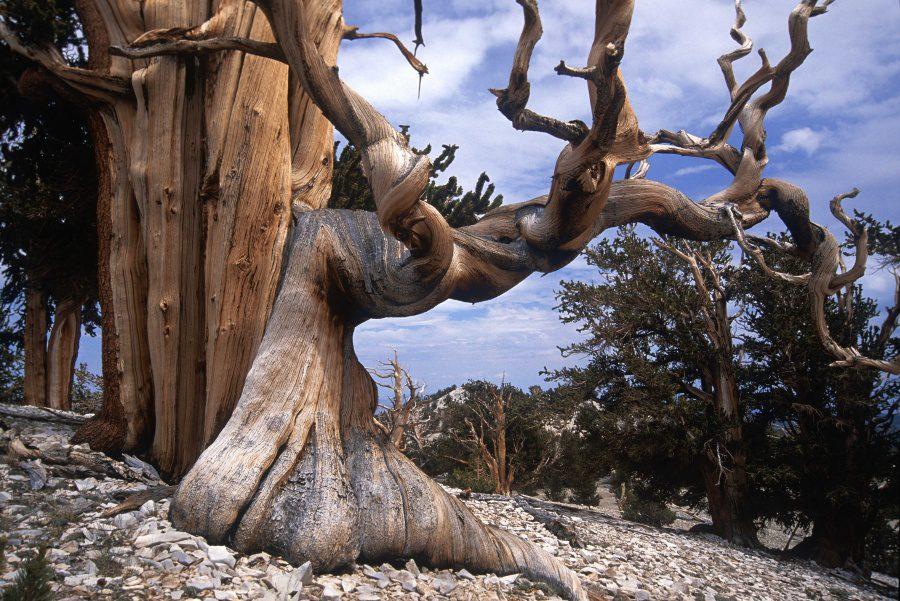 Beautiful and strange trees10