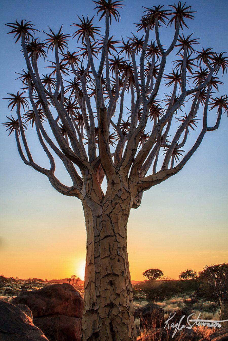 Beautiful and strange trees11
