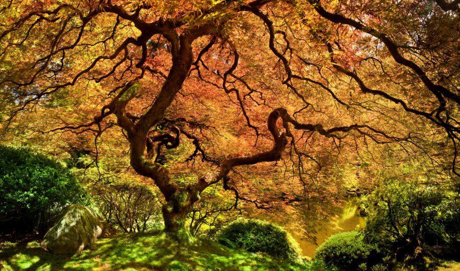 Beautiful and strange trees12