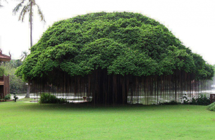 Beautiful and strange trees2