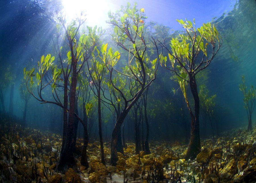 Beautiful and strange trees3