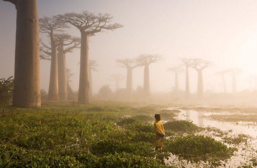 Beautiful and strange trees4
