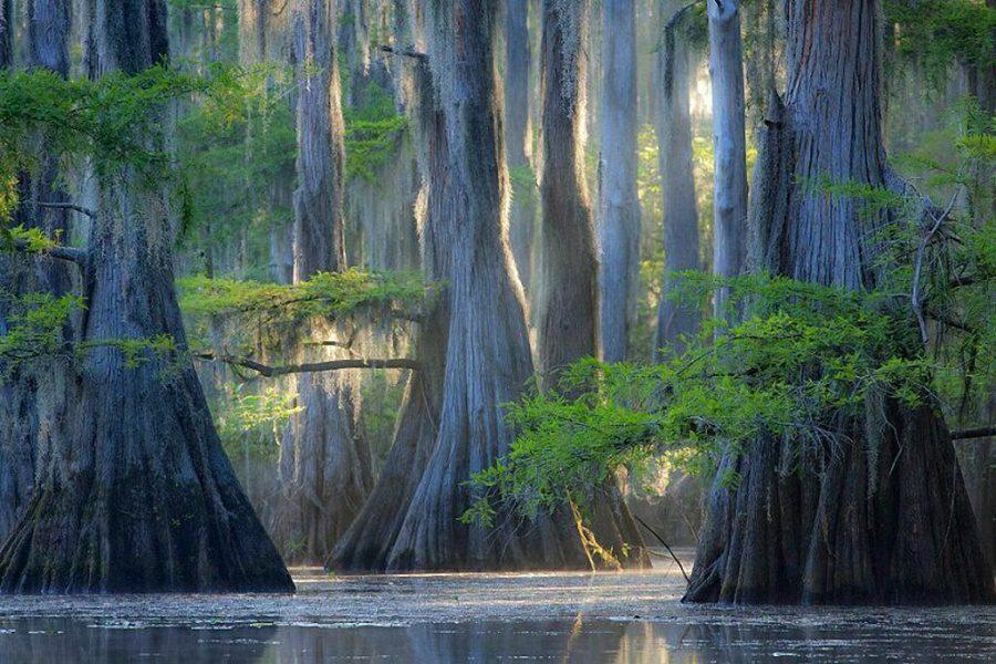 Beautiful and strange trees5
