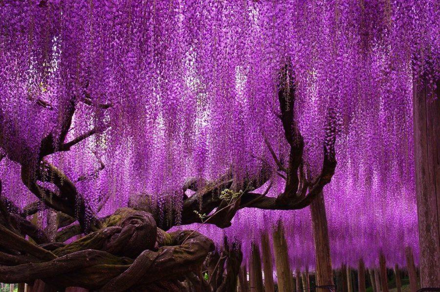 Beautiful and strange trees6