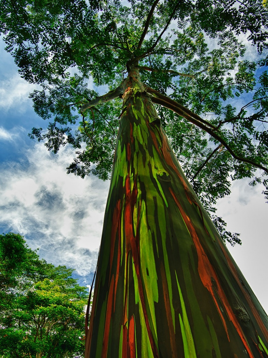 Beautiful and strange trees8