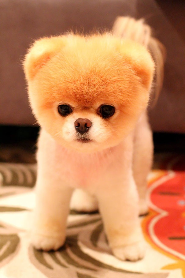 cutest puppies in the world 10
