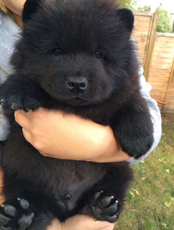 cutest puppies in the world 3