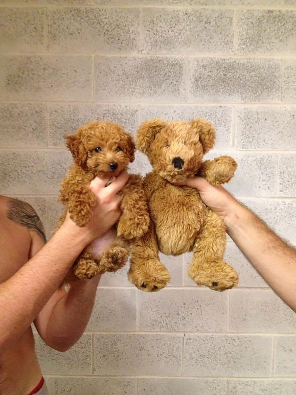 cutest puppies in the world 4