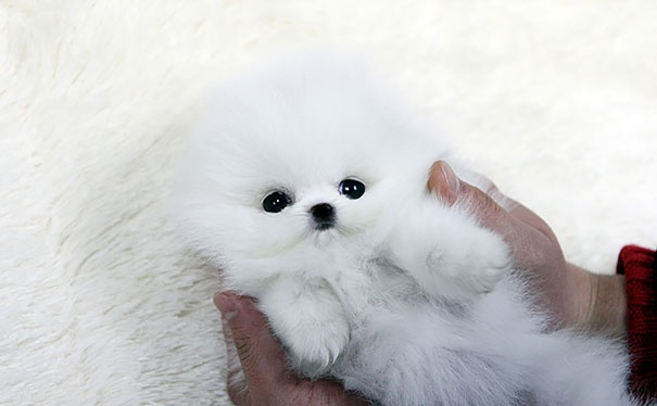 20 Of The Absolute Cutest Puppies Seen Around The World