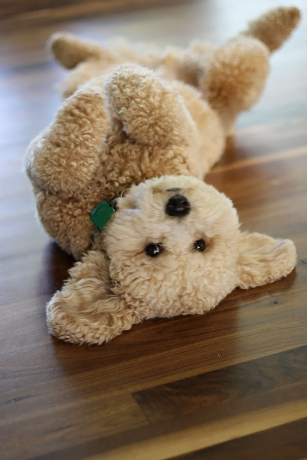 cutest puppies in the world 8