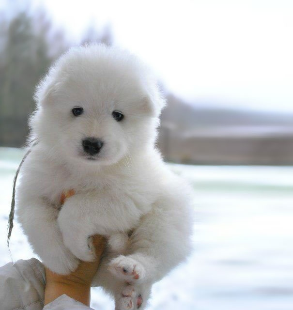 cutest puppies in the world 9