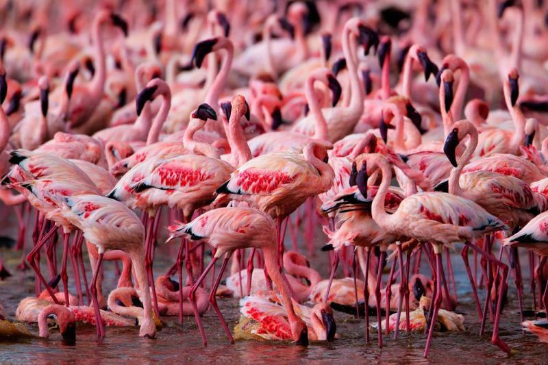 flamingos live lake 10