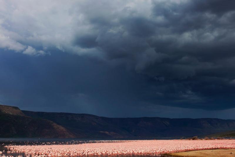 flamingos live lake 3
