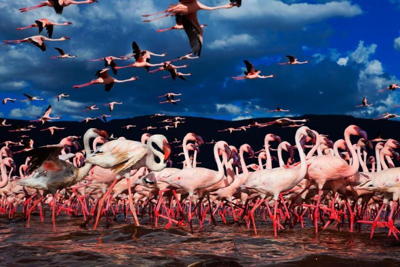 flamingos live lake 7