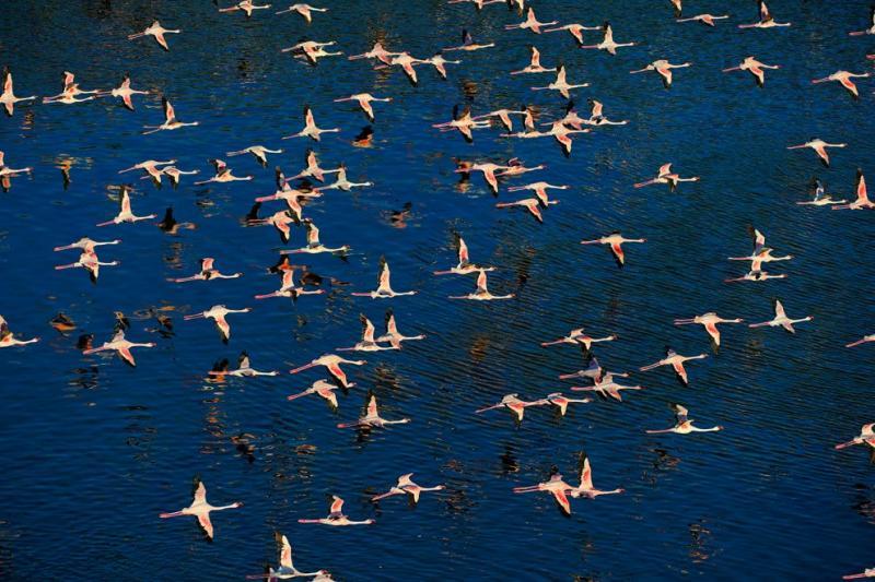 flamingos live lake 9